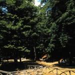 Foresta Umbra Puglia