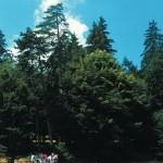 Da vedere Gargano Foresta Umbra